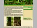 Náhled webu Bambusy.info