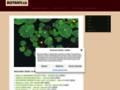 Náhled webu Botany.cz