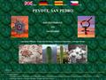 Náhled webu Peyote, San Pedro