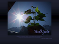 Náhled webu Dhamma Centrum Bodhipala