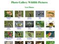 Náhled webu Naší přírodou